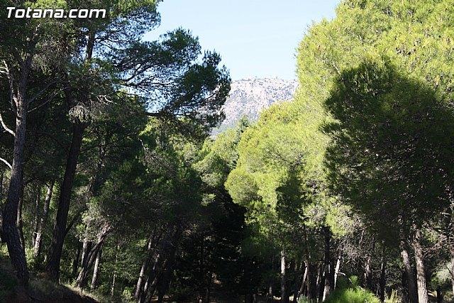 La Comunidad organiza una jornada informativa sobre el uso sostenible de la biomasa forestal, Foto 1