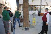 La concejalía de Parques inicia un nuevo tratamiento de endoterapia contra el picudo