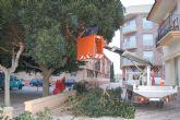 Podan los ficus de la plaza del Ayuntamiento para garantizar la seguridad