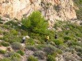 El club senderista de Totana realizó una ruta por la Sierra de la Muela en Cartagena