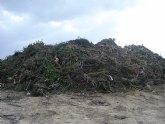 Agricultura instala una red de trampeo en el paraje ´La Jaira´, en Abanilla, para evitar la propagación del picudo rojo de las palmeras