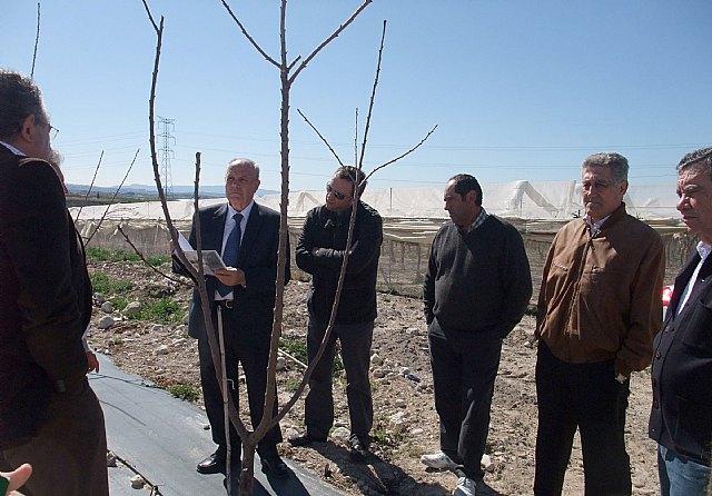 La Comunidad prevé que la finca experimental de Molina de Segura puede obtener buena producción de cereza temprana con poca agua - 1, Foto 1