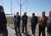 La Comunidad prevé que la finca experimental de Molina de Segura puede obtener buena producción de cereza temprana con poca agua