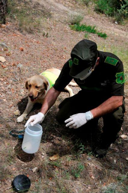 La Comunidad organiza una jornada sobre el uso ilegal de cebos envenenados en el medio natural - 1, Foto 1