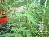 La Policía Nacional desmantela una plantación de marihuana ubicada en una vivienda de la localidad de Alcantarilla