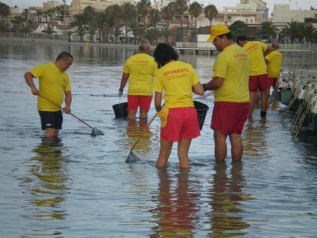 Más de una treintena de voluntarios de Protección Civil colaboran en la retirada de medusas - 1, Foto 1
