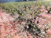 Zonas de cultivo afectadas por la granizada