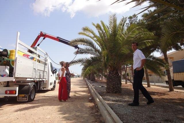 La concejalía de Parques y Jardines ensaya un tratamiento innovador contra el picudo rojo - 1, Foto 1