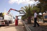 La concejalía de Parques y Jardines ensaya un tratamiento innovador contra el picudo rojo