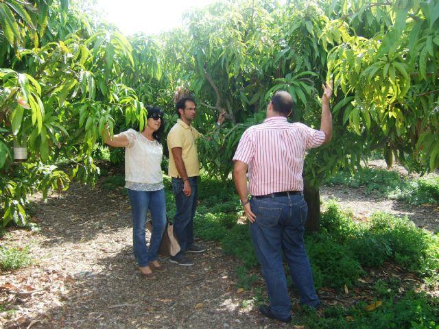 El ayuntamiento apuesta por promover cultivos subtropicales como complemento a los ya existentes - 1, Foto 1
