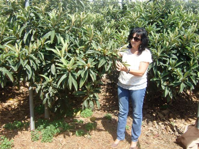 El ayuntamiento apuesta por promover cultivos subtropicales como complemento a los ya existentes - 2, Foto 2