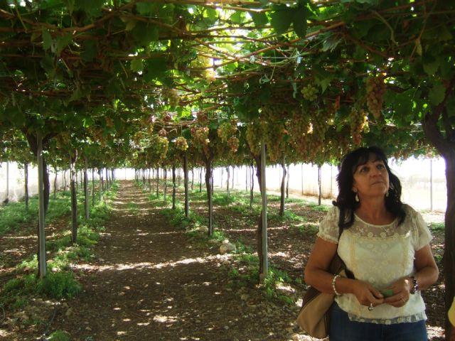 El ayuntamiento apuesta por promover cultivos subtropicales como complemento a los ya existentes - 3, Foto 3