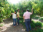 El ayuntamiento apuesta por promover cultivos subtropicales como complemento a los ya existentes
