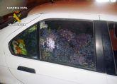 La Guardia Civil detiene a 3 personas que habían sustraído más de media tonelada de uva en Cieza