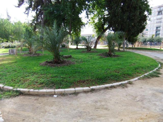 La Concejalía de Medio Ambiente repone 60 palmeras afectadas por el picudo rojo - 1, Foto 1
