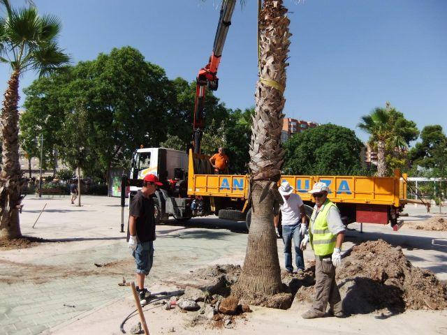 La Concejalía de Medio Ambiente repone 60 palmeras afectadas por el picudo rojo - 2, Foto 2