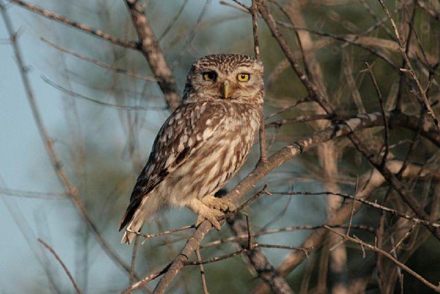 Celebramos el Día Mundial de las Aves-2011 - 2, Foto 2