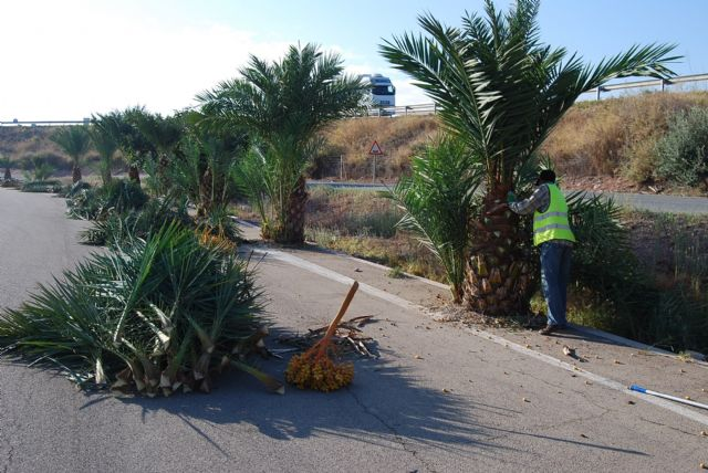 """They start an emergency plan to clean up parks and green areas in the industrial area """"The Saladar"""""""