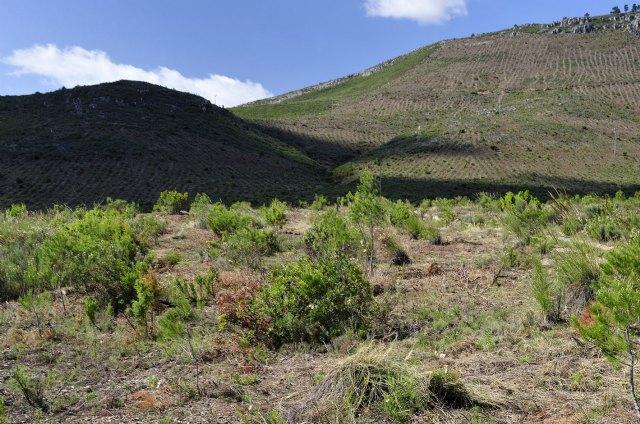 Los trabajos de regeneración forestal en la Sierra de Moratalla favorecen la recuperación y diversidad de especies vegetales y faunísticas - 1, Foto 1