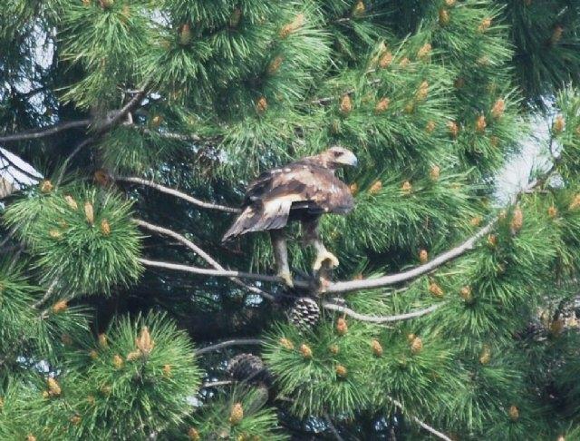 Los trabajos de regeneración forestal en la Sierra de Moratalla favorecen la recuperación y diversidad de especies vegetales y faunísticas - 2, Foto 2