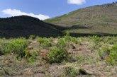 Los trabajos de regeneración forestal en la Sierra de Moratalla favorecen la recuperación y diversidad de especies vegetales y faunísticas