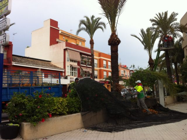 They begin the work of pruning and spraying palm trees in parks and urban gardens