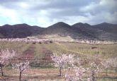 Declarado Bien catalogado por su Interés Cultural el yacimiento arqueológico 'Barranco del Asno' en Puerto Lumbreras