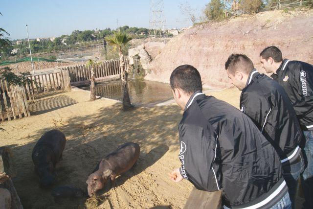 ElPozo Murcia Fútbol Sala apadrina a la cría de hipopótamo de Terra Natura Murcia - 2, Foto 2