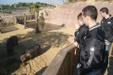 ElPozo Murcia Fútbol Sala apadrina a la cría de hipopótamo de Terra Natura Murcia