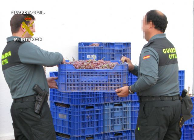 The Civil Guard arrested two people who had stolen half a ton of grapes in Totana