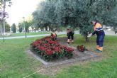 El Ayuntamiento de Molina de Segura y la empresa de servicios Sercomosa repartirán unas 3.000 macetas con flores de Pascua el próximo miércoles 21 de diciembre
