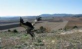 Presidencia libera cinco búhos, un buitre leonado y un halcón peregrino ingresados en el Centro de Recuperación de Fauna Silvestre