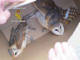 La Guardia Civil desmantela un criadero ilegal de aves rapaces