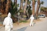 Agricultura coordina con los ayuntamientos actuaciones para la contención del picudo rojo de las palmeras