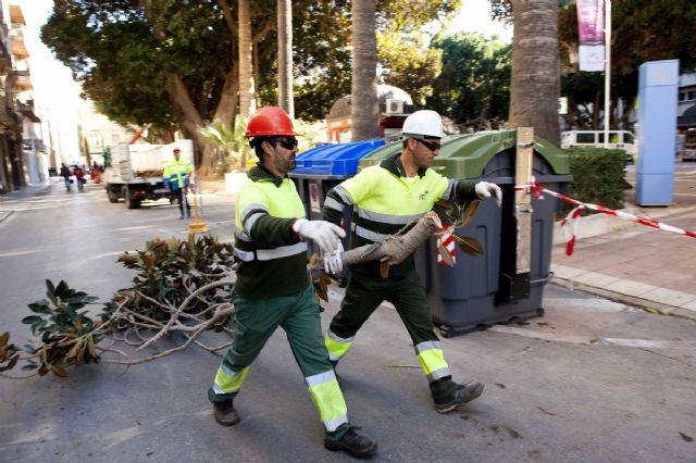 El Ayuntamiento repasa los ficus monumentales de la Plaza San Francisco - 2, Foto 2