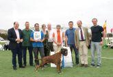 Puerto Lumbreras acogerá el próximo fin de semana una Exhibición del Bóxer Club España y un Concurso Nacional Canino con más de 500 perros