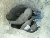 Protecci�n Civil encuentra en un hoyo pr�ximo al R�o Guadalent�n varias ovejas procedentes de un rebaño, algunas de ellas vivas