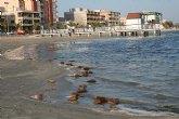 UPyD denuncia el estado de las playas del Mar Menor a escasos días del puente de Semana Santa