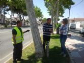 Parques y Jardines trata los árboles de la avenida Mar Menor contra la caída de hojas