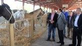 Inaugurada la Feria de Ganado Equino de Puerto Lumbreras que muestra más de 500 ejemplares de ganado durante todo el fin de semana
