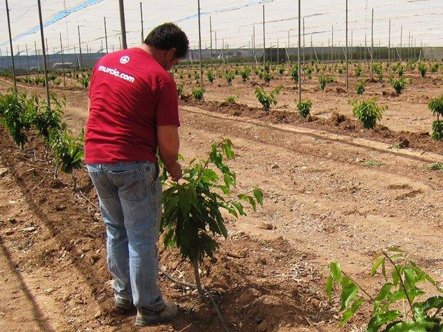Agricultura apoya la diversificación de cultivos en el municipio de Mazarrón  como alternativa al monocultivo del tomate, Foto 1