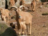 La concejal�a de Agricultura informa de que los agentes medioambientales expiden autorizaciones para la caza del arrui y el conejo