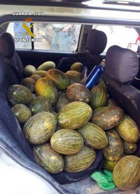 La Guardia Civil sorprende a dos personas transportando fruta sustraída en Cieza - 1, Foto 1