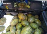 La Guardia Civil sorprende a dos personas transportando fruta sustraída en Cieza