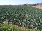 La concejalía de Agricultura promoverá un listado de personas disponibles para la realización de tareas agrícolas