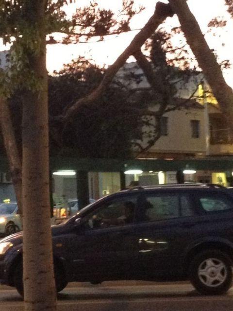 Parques y Jardines poda y retira pinos de la plaza del - 1, Foto 1