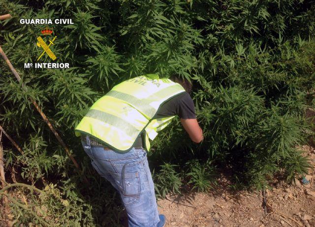 La Guardia Civil desarticula dos puntos de producción y distribución de marihuana, Foto 1