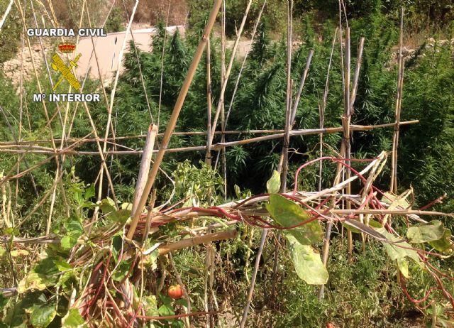 La Guardia Civil desarticula dos puntos de producción y distribución de marihuana, Foto 2