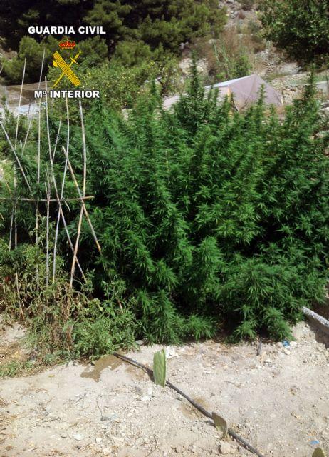 La Guardia Civil desarticula dos puntos de producción y distribución de marihuana, Foto 3