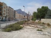 El PSOE de Cieza muestra su malestar por la reciente tala del arbolado urbano situado en la avenida Jiménez Castellanos